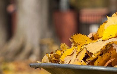 easy steps to get your garden ready for winter feature image